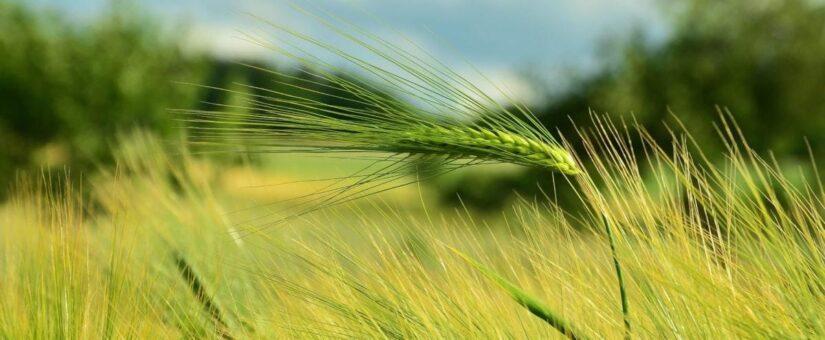 Ультрасовременная агролаборатория появится в небе России